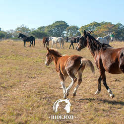 RideJozi Equestrian Ranch - RideJozi offers horse riding trails to beginners and advanced riders. Horse riding lessons. We also offer a kids outdoor, country-style party venue.