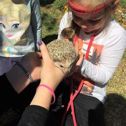 Animal Shows 4 Kidz - Interactive, educational animal shows with rabbits, guinea pigs, snakes, hedgehogs, spiders & chameleons