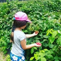 Family Day - Berry picking at The Field Berry Farm