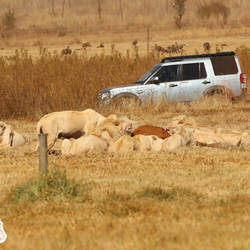 Bothongo Rhino and Lion Nature Reserve - Game reserve where you and your family can go on a game drive, watch predators feed, explore a cave, have a braai, speed around a bike track, climb a jungle gym, go for a swim, share a pizza, enjoy sundowners, stay the night and so much more.