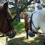 Roly Equestrian Stables & Party Venue - Party venue,  Horse riding lessons ,Pony camps, Livery, Schooling, and training for all equestrian events.