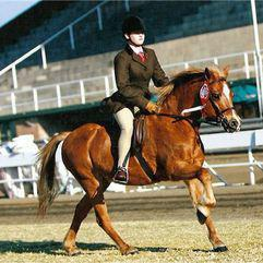 Sport - Roly Equestrian Stables riding lessons