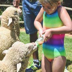 The Farm Corner - Farm animals for hire and petting zoo for  visiting schools, nursery schools, kids parties, including all animals and pony rides