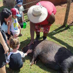 Family Fun Farm Kids Party Venue - A fun-filled party-hub, farmyard adventure; braai & picnic venue for the whole family, situated on a CAMEL FARM on the outskirts of Krugersdorp. 3 venues to cater for all events and ages.