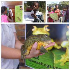 Animals - Save the Frogs Fun Day
