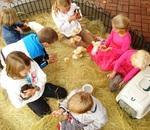 Wild and Earthly - Educational animal encounters for schools, parties, functions. Mobile Farmyard, Petting zoo's, Pony Rides, Mobile incubators.