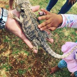 Animal Shows 4 Kids - Mobile, interactive and educational animal shows for children. Shows include a variety of reptiles, spiders, rabbits, guinea pigs and hedgehogs.