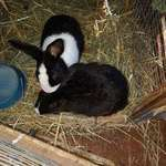 The Bunny Hop Haven - Non profit company (NPC) in animal rescue and as an educational centre.