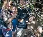 Bush Babies Monkey Sanctuary -  Experience free-living monkeys in a natural and wild environment.