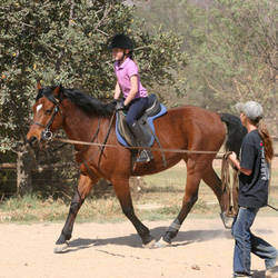 Caryn's Ponies & Farmyard Animals -  Kids parties with mobile farmyard,  petting zoo, ponies, horse riding lessons, disabled riding lessons, holiday programs,