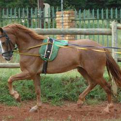 Cradle Equestrian Centre - Horse Riding Lessons, Stabling, Horse Sales, Outrides, Horse Schooling