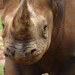 Johannesburg Zoo - the Big 5, Animals of the Amazon, Day and night tours, children's farmyard, tractor rides, kids party venue, school tours and more