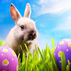 Easter  - Easter egg hunt and pony rides