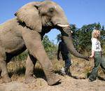 The Elephant Sanctuary Hartbeespoort - We offer our guests exhilarating elephant driven programs, where the most important part of our operation is happy elephants and satisfied guests.