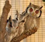 FreeMe Wildlife Centre - Wildlife Rehabilitation Centre. We give talks and slide shows at schools, and other functions.