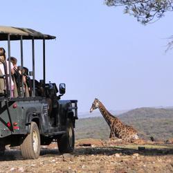 Imagination Shakers - Holiday safari camps sleepover - primary school tech-free