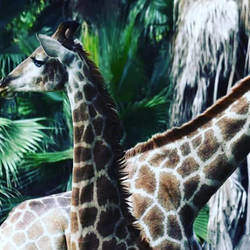 The National Zoological Gardens of South Africa / Pretoria Zoo - This is the largest zoo in SA with Aquarium & Reptile Park, holiday programs, tours, camping, birthday parties, tractor train rides etc.