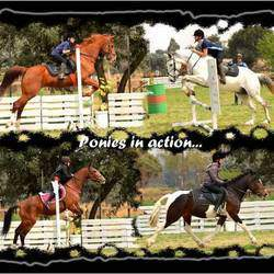 Jumangi's Equestrian Centre - Horse riding lessons, outrides (only small groups), fun days, shows, pony camps.