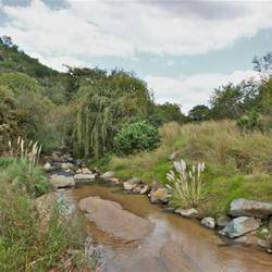 Klipriviersberg Nature Reserve - Nature rambles through an area of grasslands and wooded hills with wildlife only 10km from the heart of Joburg.