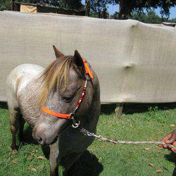 Majestic Miniature Horse Stud - Party hire, miniature horse and carriage, special occasion hire, kids rides