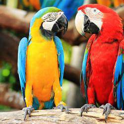 Montecasino Bird Gardens - Our Bird Gardens houses a collection of over 142 African Cycads species. We also host daily showings of the Flight of Fantasy Bird Show, a free educational bird show, that will delight young and old.