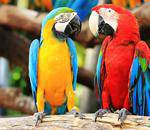 Montecasino Bird Gardens - Birds, amphibians, reptiles, small mammals, cycad garden,  bird shows PLUS  kids party venue, tea garden/restaurant