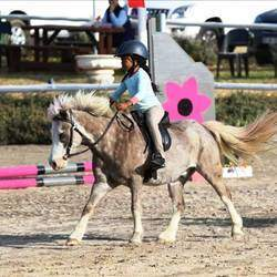 Pony Perfection - Pony Parties Rides, Unicorn Rides, horse riding lessons