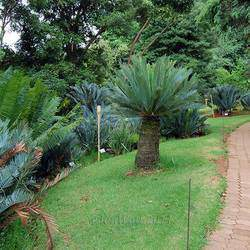 Pretoria National  Botanical Garden - Botanical gardens in Pretoria for family outings, picnics,