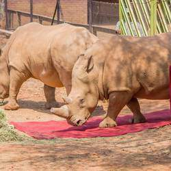 The National Zoological Gardens of South Africa / Pretoria Zoo - This is the largest zoo in SA w/  Aquarium & Reptile Park, holiday programs, tours, camping, birthday parties, tractor train rides etc.