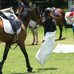 Ranger Stables - Ranger Stables is a small stable yard found in the heart of Craighall Park. We offer horse riding lessons, pony rental for parties,  holiday camps and weekday / weekend outrides.