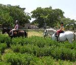 Real Trees Adventure Farm - Party venue for kids birthday parties, adventure park, pony riding lessons and daytrips.