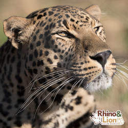 Rhino and Lion Nature Reserve - A privately owned game reserve covering some 1200 hectares where visitors may now view in excess of 650 heads of game, including  some very rare and endangered species