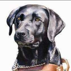 SA Guide-Dog Association - Charity organisation - fundraising, sponsoring & education about guide dogs for the blind