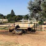 SARDA Gauteng at the EARTH Centre - Free therapeutic horse riding & other interactive equine therapies for physically and mentally challenged children & young adults that cannot afford