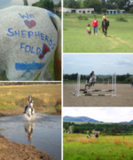 Shepherds Fold Stables - Horse riding lessons and holiday  pony camps for children.