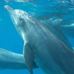 Swim with Wild Dolphins in South Mozambique - Swimming with wild dolphins in Southern Mozambique, just 15kms north of Kosi Bay Border. Family weekend getaways with facilitated programs on offer.