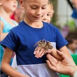 Party Animals SA - Interactive Educational Animal Shows with Caiman Crocodile, Snakes, Tarantulas, Chinchilla, Hairless Rat, Blue-Tongue Skink, Tenrec, Ant Farm