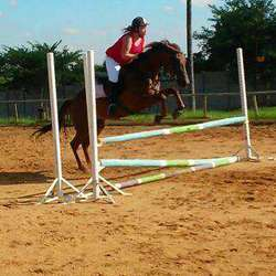 The Tall Horse - Horse riding lessons, livery, horse trading