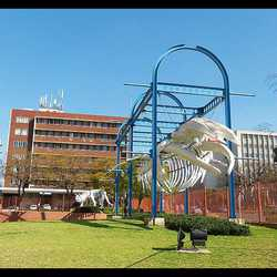 Transvaal Museum - The Transvaal Museum is South Africa's leading natural history museum.