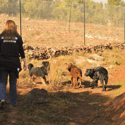 Woodrock Animal Rescue - Non-profit, pro - life, rescue, rehabilitation and re-homing facility in Gauteng, South Africa
