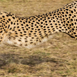 The Ann van Dyk Cheetah Centre - Cheetah and wildlife Centre for a family trip, educational tour to see wildlife.