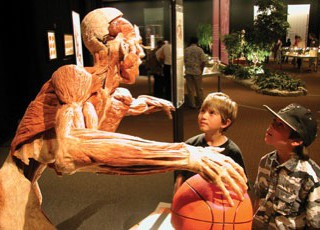 BODY WORLDS & The Cycle of Life: A review for parents