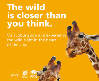 Experience the Big 5 in the heart of the city at Joburg Zoo