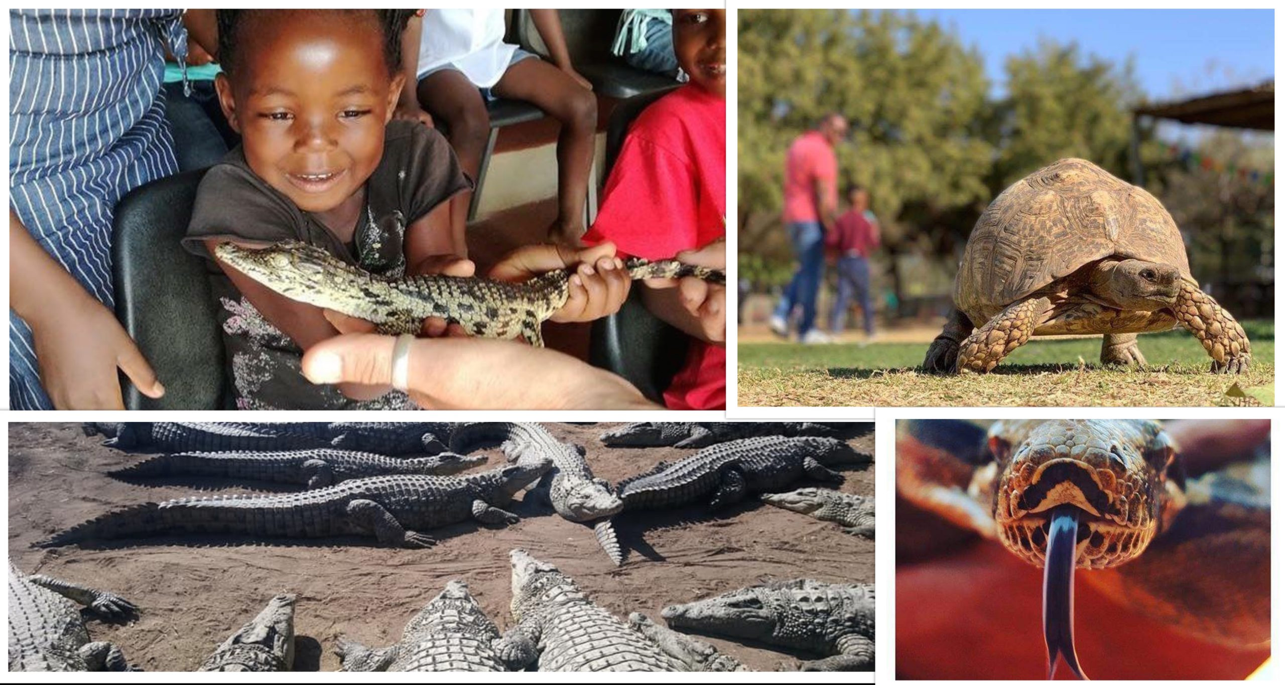 Family Outings in Gauteng: Croc City